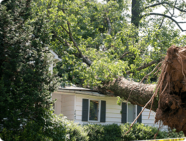 house with a large tree that fell on the roof