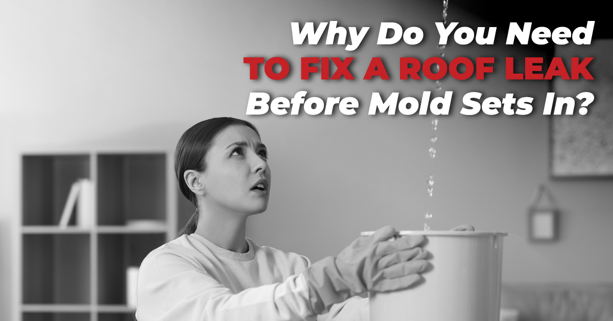 Why Do You Need To Fix A Roof Leak Before Mold Sets In?